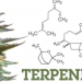Talkin' bout Terpenes: Part 1 in the series – Introduction