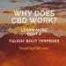 Series: Talkin' bout Terpenes #2 – Key Terpenes on the Bus